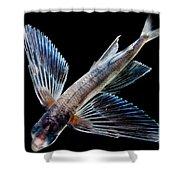 Spotfin Flyingfish Shower Curtain