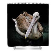 Spotlight On A Pink-backed Pelican Shower Curtain