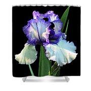Spotlight On 'freedom Song' Bearded Iris Shower Curtain