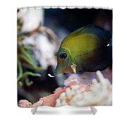 Spotted Aquarium One Fish Shower Curtain