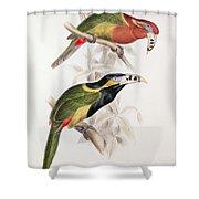 Spotted Bill Aracari Shower Curtain by Edward Lear