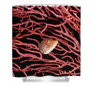Spotted Boxfish Hides In Red Sea Fan Shower Curtain