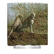 Spotted Cats Shower Curtain