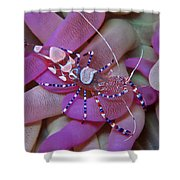 Spotted Cleaner Shrimp On Anemone Shower Curtain