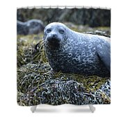 Spotted Coat Of A Harbor Seal Shower Curtain