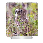 Spotted Eagle Owl  Shower Curtain