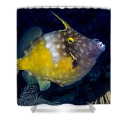 Spotted Filefish Shower Curtain