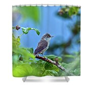 Spotted Flycatcher Muscicapa Striata .  Shower Curtain