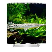 Spotted Gar Aquarium Fishes Pair Shower Curtain