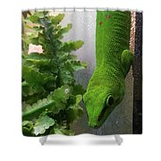 Spotted Gecko Shower Curtain