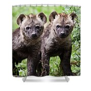 Spotted Hyena Cubs I Shower Curtain