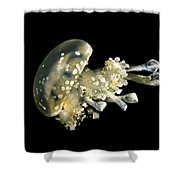 Spotted Lagoon Jellyfish Shower Curtain
