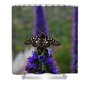Spotted Moth On Purple Flowers Shower Curtain