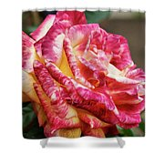 Spotted Rose Shower Curtain