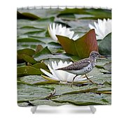 Spotted Sandpiper And Lilies Shower Curtain