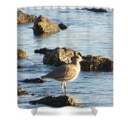 Spotted Sandpiper Keeping Sentry On The Bay Shower Curtain