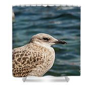 Spotted Seagull Shower Curtain