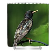 Spotted Starling Shower Curtain