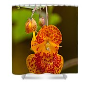Spotted-touch-me-not And Buds Shower Curtain