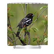 Spotted Towhee Shower Curtain