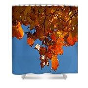 Spray Of Autumn Leaves  Shower Curtain