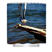 Spread And Tern Shower Curtain