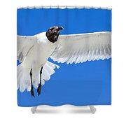 Spread Those Wings Pano Shower Curtain