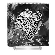 Spread You Wings And Fly Shower Curtain