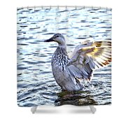 Spreading My Wings Hdr Shower Curtain
