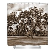Spreading Tree Shower Curtain