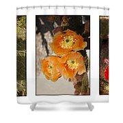 Spring - Desert Style Shower Curtain