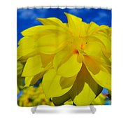 Spring 2015-pic19 Shower Curtain