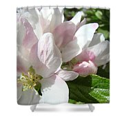 Spring Apple Blossoms Art Prints Apple Tree Baslee Troutman Shower Curtain