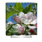 Spring Apple Blossoms Pink White Apple Trees Baslee Troutman Shower Curtain