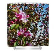Spring Apple Blossoms- Spring Flowers Shower Curtain
