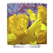 Spring Art Prints Yellow Daffodils Flowers Pink Blossoms Baslee Troutman Shower Curtain