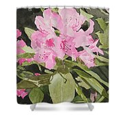 Spring At The Cabin Shower Curtain