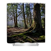 Spring At The Park Shower Curtain