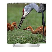 Spring Babies  Shower Curtain