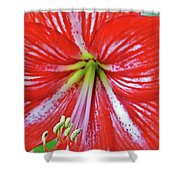 Spring Beauty Shower Curtain