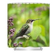 Spring Beauty Hummingbird Square Shower Curtain