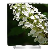 Spring Bloomers 2 Shower Curtain
