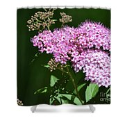 Spring Bloomers  Shower Curtain