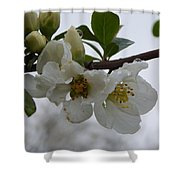 Spring Blooms In White Shower Curtain