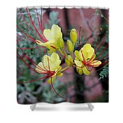 Spring Blooms Yellow Red 052814a Shower Curtain