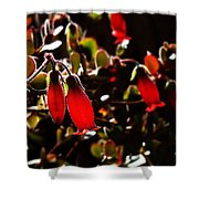Spring Blossom 14 Shower Curtain