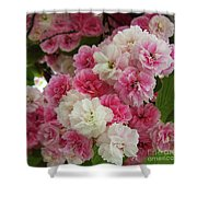 Spring Blossom 3 Shower Curtain