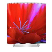Spring Blossom 8 Shower Curtain