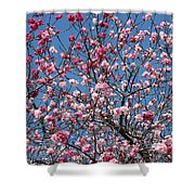 Spring Blossoms Against Blue Sky Shower Curtain