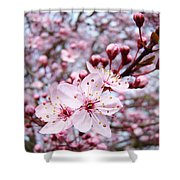 Spring Blossoms Art  Pink Tree Blossom Baslee Troutman Shower Curtain